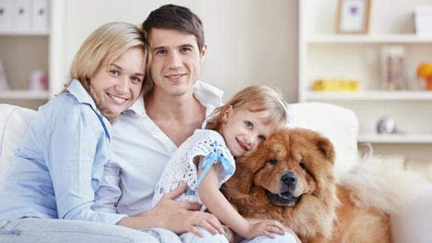 Wills & Trusts dog-young-family Direct Wills Leicester